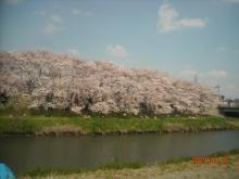 桜&柊ママのブログ